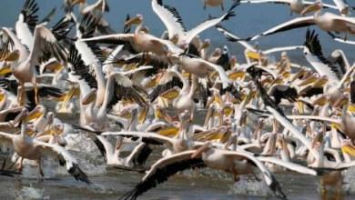 صورة إعلان طوارئ صحية بالجزائر إثر تسجيل بؤرة لأنفلونزا الطيور