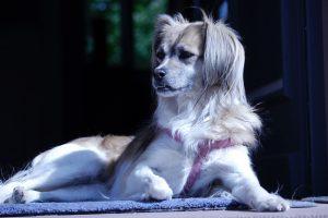 Luna, Hund im Team echt.echt design