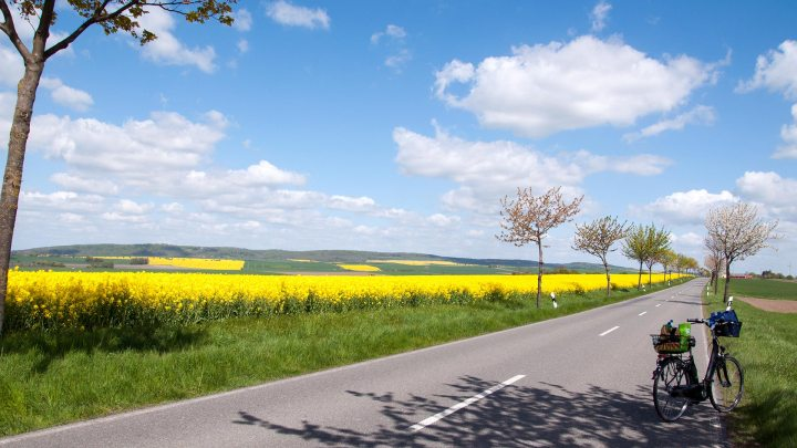 Landstraße mit Rapsfeld