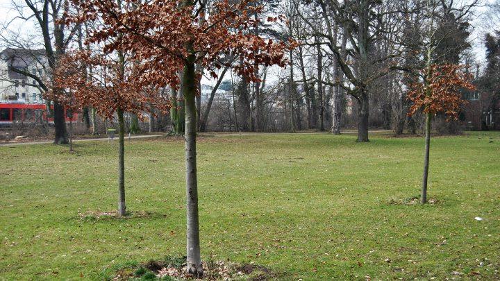 Bäume markieren Umrisse der Bastionsspitze