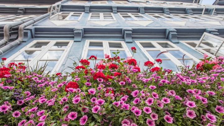Blumen an Rathausfassade