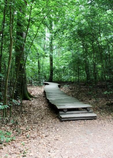 Holzsteg im Wald