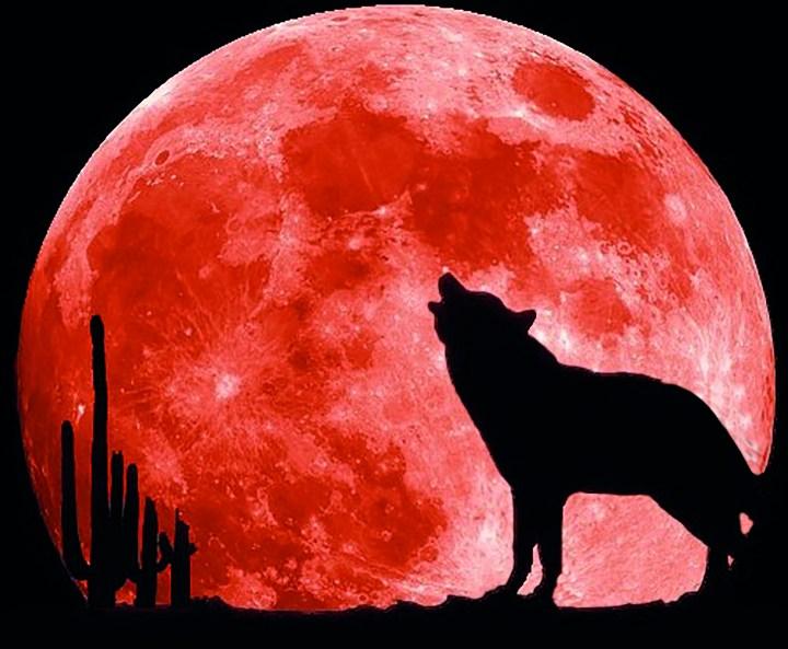 Der heulende Wolf fällt im Logo der »Lupus Line Dancer« besonders auf.