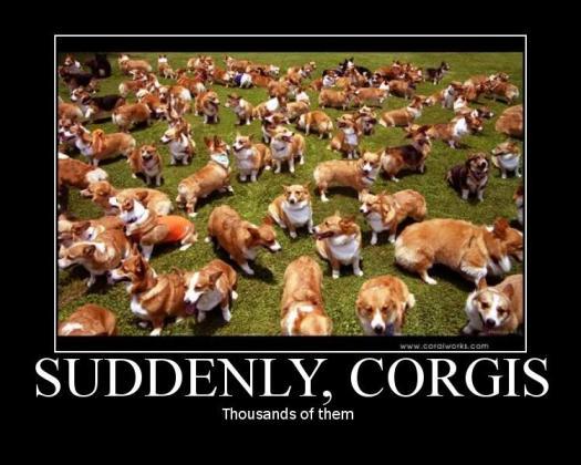 corgis