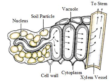 Transpiration and Excretion