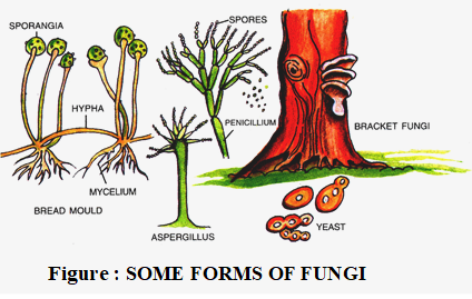 forms of fungi