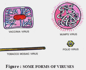 forms of viruses