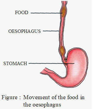 movement of the food