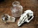 bottle, stopper and bird skull