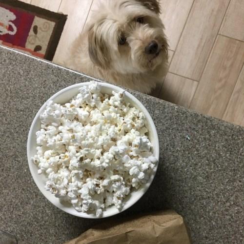 Zoey eyeing the popcorn!