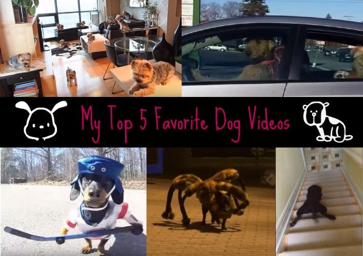 My Top 5 Favorite Dog Videos