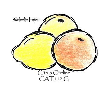 Citrus Outline