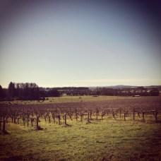 Brangayne vineyard + cellar door