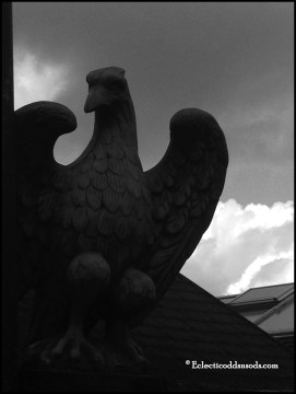 7. What is this eagle guarding, do you find it looks protective or foreboding?