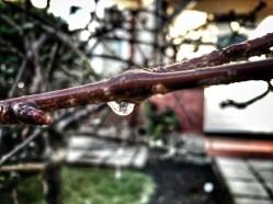 Wood & droplet - minor edit