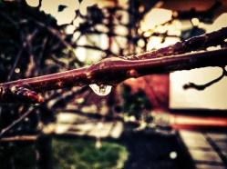 Woody droplet
