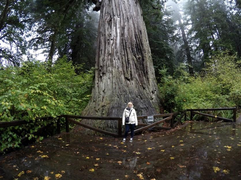 Redwood, USA