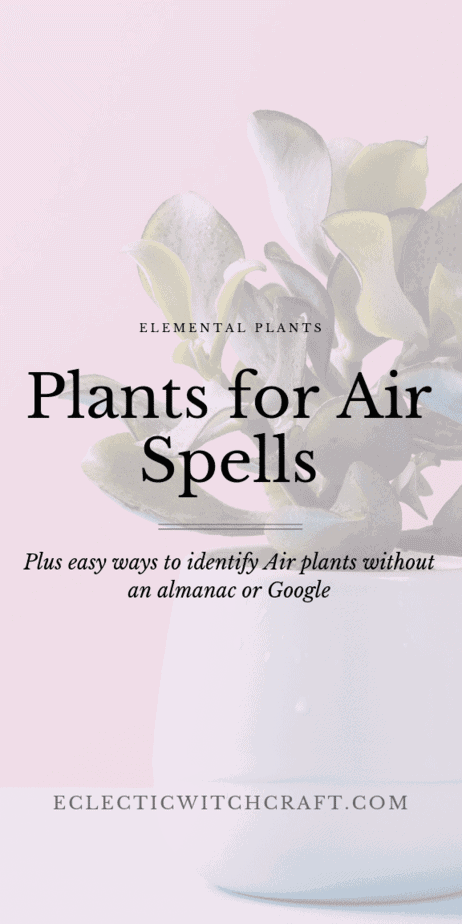 Elemental correspondences aren't necessary for most spell, but they can be extremely helpful to boost the effectiveness of a spell or ritual. Because of that, it is helpful for witches to learn everything they can about the elements and how to call them. Air Element aesthetic and plants for air astrology signs. Air element magic and meaning. Air element Wicca. Air element zodiac. House plants for air signs. Dandelion magic spells. #houseplants #witchcraft #spells #astrology