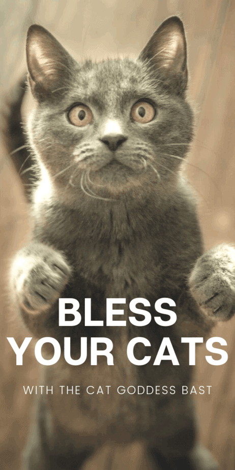 This cat blessing spell works from accurate historical and mythological information about the ancient Egyptian goddess Bast. Use witchcraft to call on Bast / Bastet to bless your kawaii cat and protect them from harm. Witch blessing charms. Pagan goddess. Cat goddess. Egyptian goddess. Blessing spells that work. Witch familiars. DIY cute cat stuff. #cat #kitten #kawaii #bast #bastet #egypt #egyptian #mythology #witch #pagan #wicca #witchcraft #occult