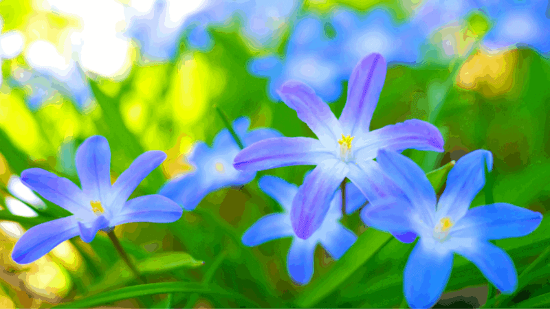 Decorative image of blue flowers
