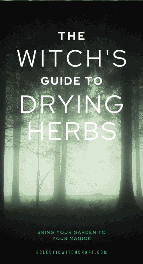 The witch's guide to drying herbs for herbal magick. Bring your garden into your magickal practice and save money with budget witchcraft. | kitchen witchery herbal magic | herb spells herbal magic | drying herbs hanging | dry herbs diy | how to hang dry herbs | drying herbs for tea | dried herb storage | how to store dried herbs | best way to dry herbs | air drying herbs | growing and drying herbs | dried herbs gifts | #witch #witchcraft #herbalism #pagan #wicca #magick #garden