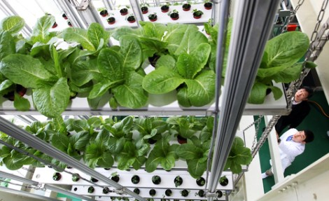 South_Korea_vertical_farms_Suwon