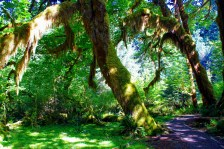 hall-of-mosses-710595