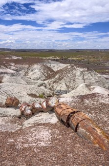 Petrified Forest 003