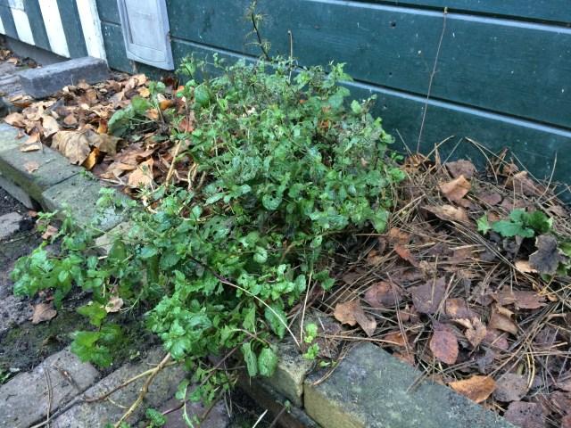 Plantenborder met mulch