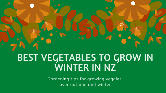 Best Vegetables To Grow In Winter Nz Eco Pippa