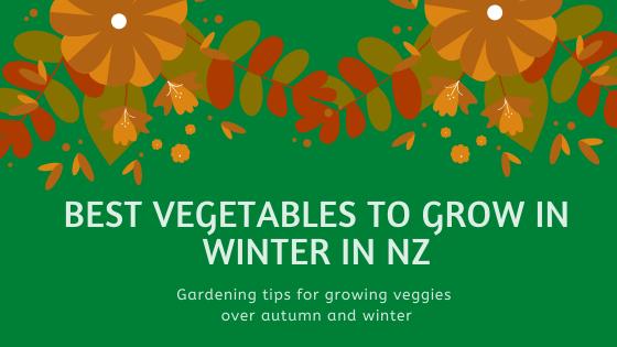 Best vegetables to grow in winter NZ