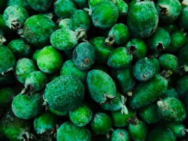 Feijoas are in season in New Zealand in autumn (April and May)