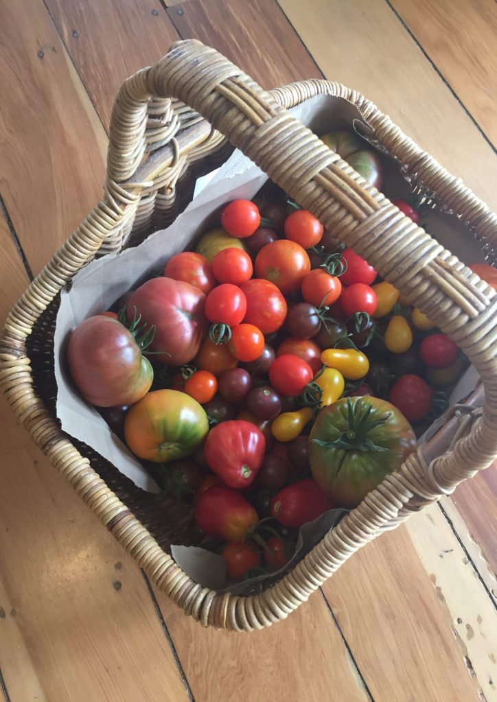 A basket of tomatoes, one of our favourite vegetables
