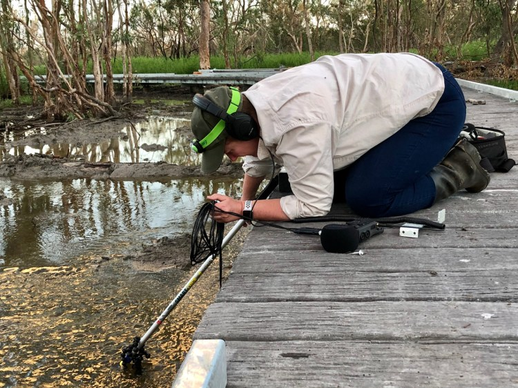 Recording under water from the boardwalk at Burrima