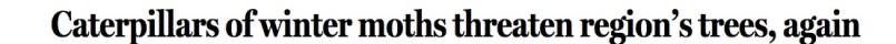 winter moth headline