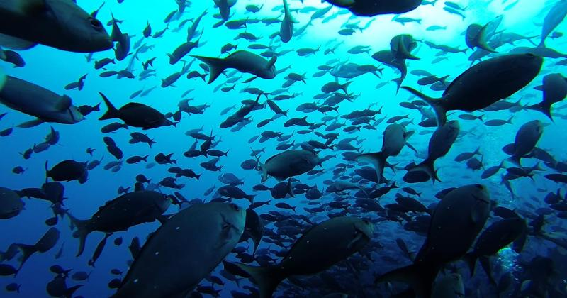 Brian Cheng and Colleagues Find Marine Protected Reserves Do More Than Restore Fish