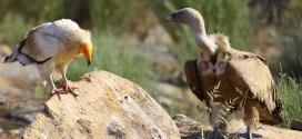 Birdwatching - Faia Brava