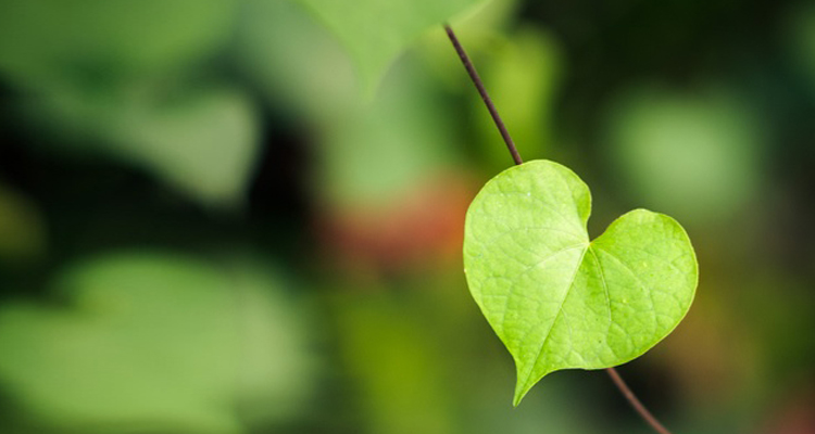 https://i2.wp.com/ecoalpispa.com/wp-content/uploads/2019/02/green-valentines-day-gifts1.jpg?fit=750%2C400&ssl=1