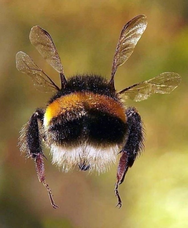 https://i2.wp.com/ecoalpispa.com/wp-content/uploads/2019/05/savethebeesnation.jpg?fit=661%2C800&ssl=1