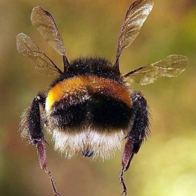 ¿Es posible un mundo sin abejas?