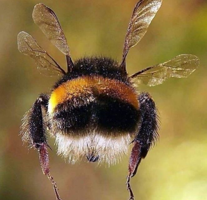 https://i2.wp.com/ecoalpispa.com/wp-content/uploads/2019/05/savethebeesnation.jpg?resize=661%2C640&ssl=1