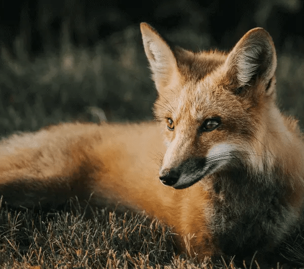 Do Wild Animals Have Any Rights?
