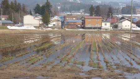 Rice farming village.  Photo and permission Su Grierson