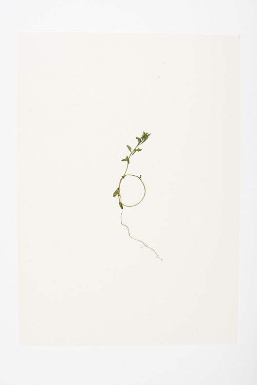 Dear Nature (2018), Courtesy the artist and the Ikon Gallery