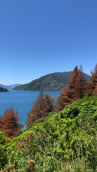 View over the Tennyson Inlet from the Archer Trail