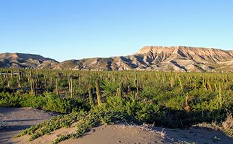 La Duna ecology center la paz baja california sur cacti forest