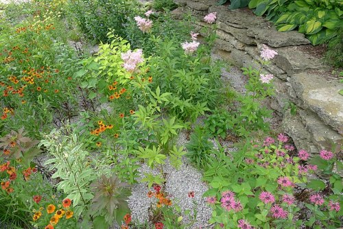 Photo of rain garden with flowering plants