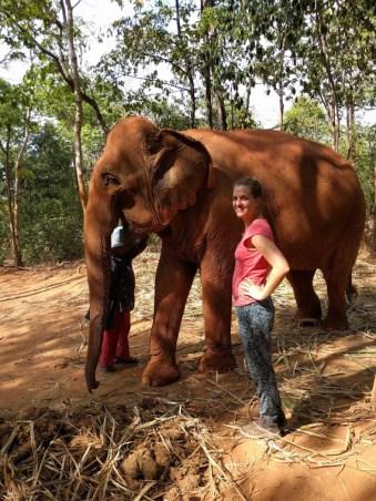 Surin Elephant Project