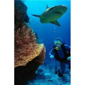 shark and reef