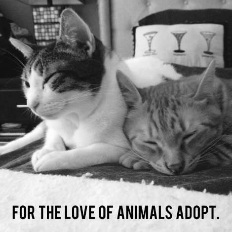 for the love of animals adopt